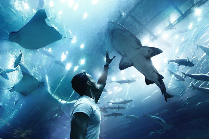 Aquarium in Dubai - Dubai Family Holiday