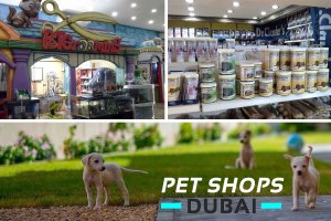 Best Stores & Pet Shops in Dubai for Pet Lovers