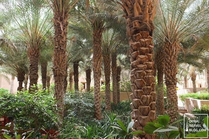 trees in the desert resort oasis