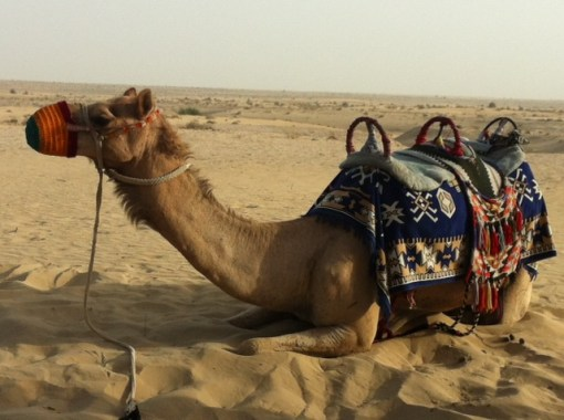 At least this one (which I photographed at Bab Al Shams) isn't going anywhere fast...