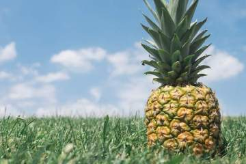 What's On Pineapple