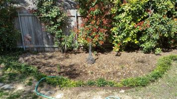We planted some lantana of various colors, some plumed monkey grass, and left room for two rose bushes