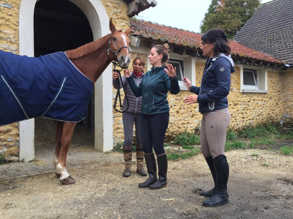 equicoaching et hypnose