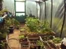 Cieplarnia - roślinki to lubią na wiosnę i rosną, rosną