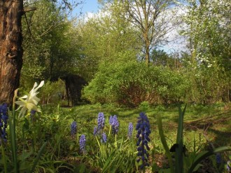 W soczystej zieleni wiosny