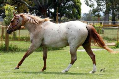 """The very lovely Amazen Grace, our """"Cherry"""" , still wild and free"""