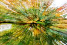 abstract-leaves-7
