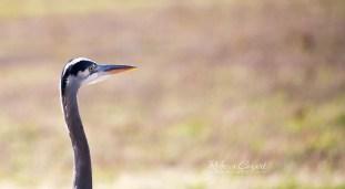 bird-heron-head