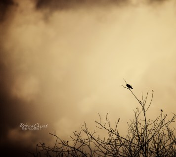 odd-bird-in-tree