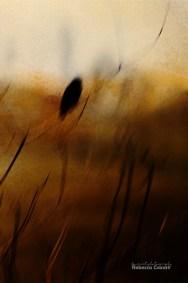 birds-blurred-bird-with-texture-vertical