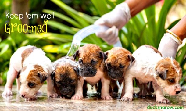 Keep your dogs well groomed! #doggrooming #pethair Ducks 'n a Row