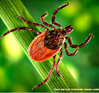 Lyme disease is spread by ticks