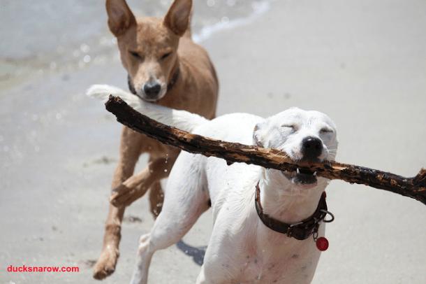 fetch; stick; dog play