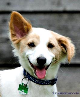 dirty dog ears, muddy paws, dog bath