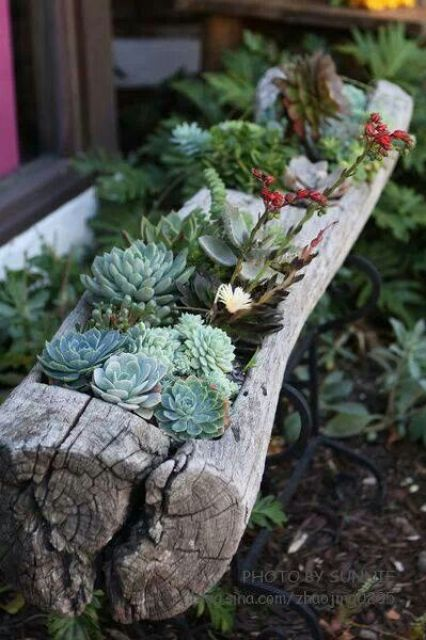 flowers, garden, succulents, planter