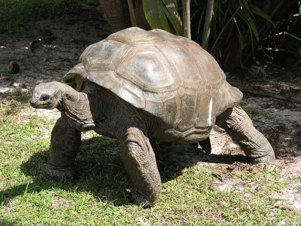 T is for Turtle and T is for Tortoise preschool lesson with a fun real story about a tortoise