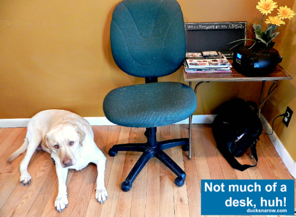 WAHM, blogging, mom blogger, in-home office, yellow lab