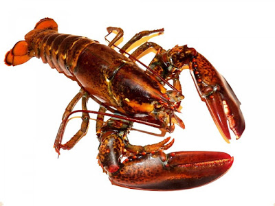 Lobster Day; lobster recipes