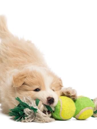 organizing dog toys