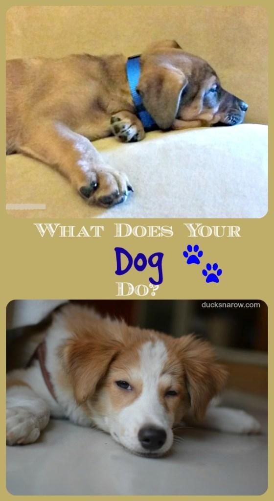 What Does A Dog Bark Sound Like