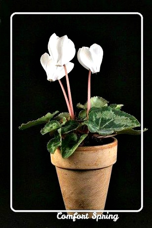 Keep winter houseplants healthy