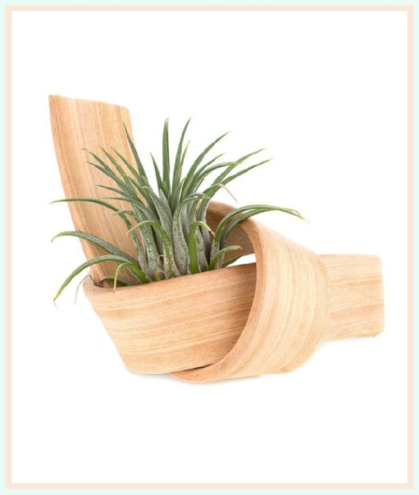 Handmade wooden knot planter for air plants #ad