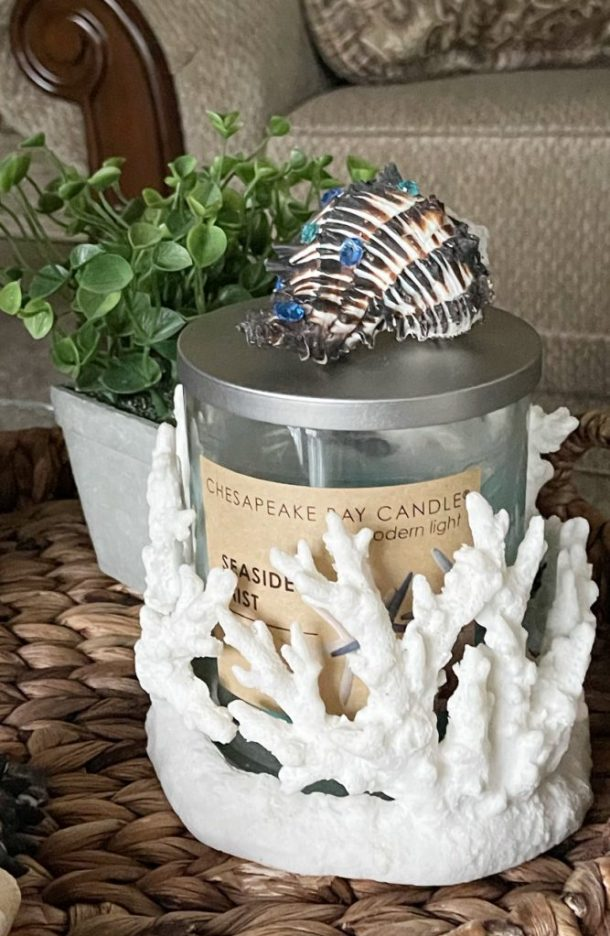 How to use sea shells in your home decor