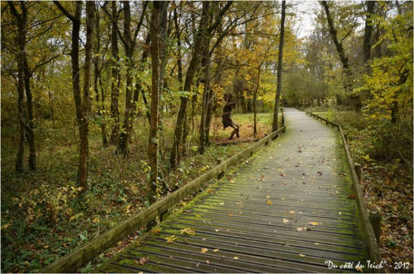 BLOG-DSC_17990-passerelle forêt enchantée Rives d'Arcins