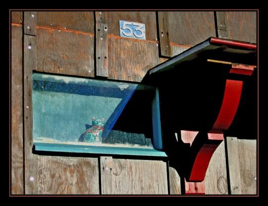 CP-Img_1708-chat en vitrine 53