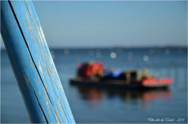 BLOG-DSC_27379-piquet bleu et plate ostréicole chai nous Grand Piquey