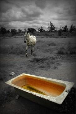 PB-10-DSC_8169-cheval dalmatien et baignoire 2