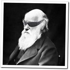 darwin shades