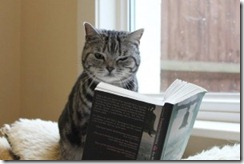Cat-Reading-Book-300x200