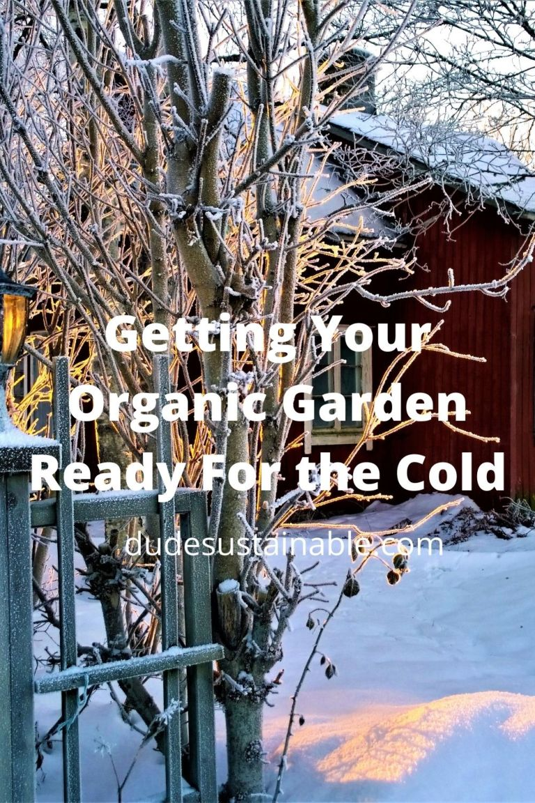 Getting Your Organic Garden Ready For the Cold