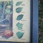 Leaf Identification Sign on the C&O Canal