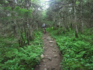 Stank Hiking in the Alpine in New Hampshire