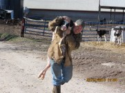 Carrying a Newborn Calf on a Cow Farm in Augusta, Missouri
