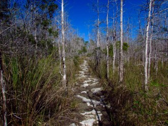 Trail in Big Cypress National Preserve