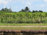 Coconut Farm along the Southern Glades Trail