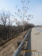 Highway Weed Outside Junction City, Kansas
