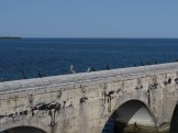 Pelicans and Anhingas on the Old Bridge in the Florida Keys