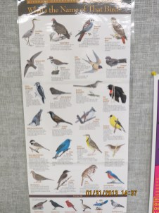 Birds Poster at the Weldon Spring Conservation Area