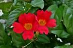 Garden Flower in Nelson