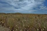 Waipu Dunes