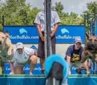 Dueling Dogs on Blue Buffalo Dock