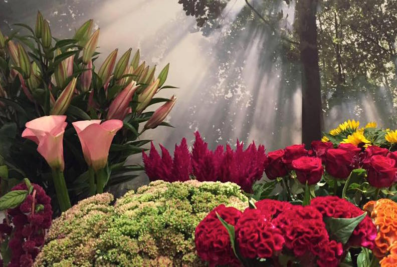 Blumen Box Bilk