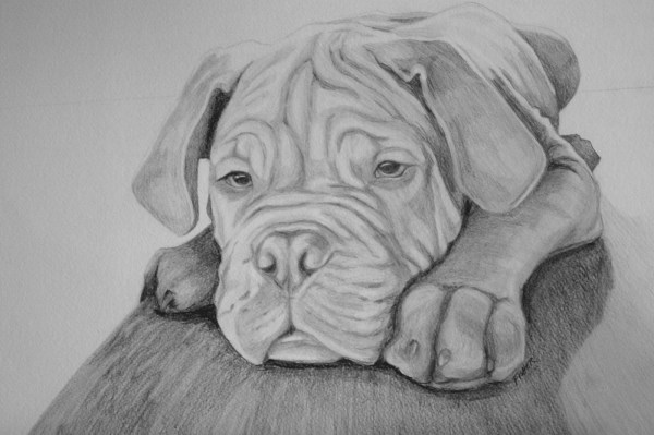 Zenfish Dog Drawings Simply Amazing View