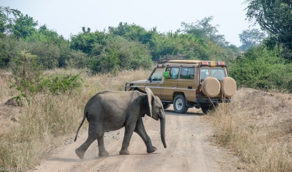 Game drive in Queen Elizabeth National Park