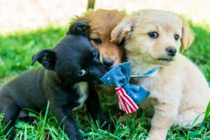 Lisa Parkers Puppies