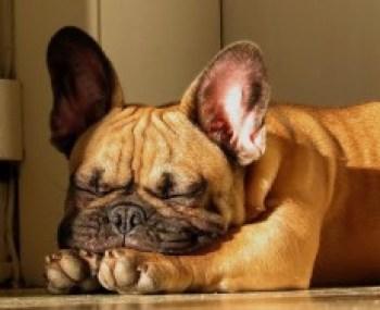 sleeping-dog-05